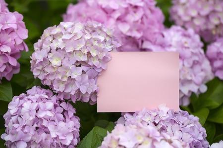 Blank pink paper note in hydrangea flowers close up stock photo blank pink paper note in beautiful hydrangea flowers close up photo mightylinksfo Gallery