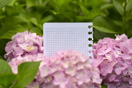 papier vierge: Blank morceau de papier du bloc-notes dans de belles fleurs d'hortensia Banque d'images