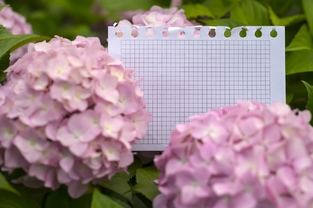 vintage background paper: Blank paper piece from notepad in tender hydrangea flowers