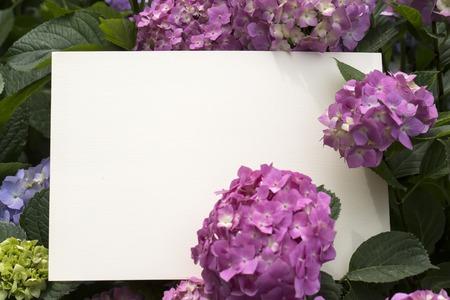 papier vierge: Blank note papier dans fleurs d'hortensia d'appel d'offres Banque d'images