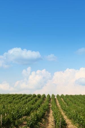 青と曇り空と美しいぶどう畑の風景