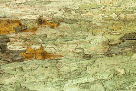 geen: Dry old geen mossy tree bark texture Stock Photo