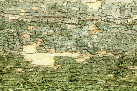 natural backgrounds: Dry mossy tree bark texture closeup Stock Photo