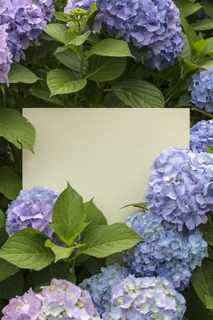 papier vierge: Blank paper note in hydrangea flowers background