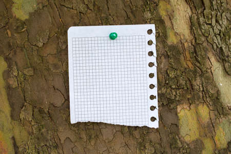 teared: Blank piece of teared paper at the bark of tree