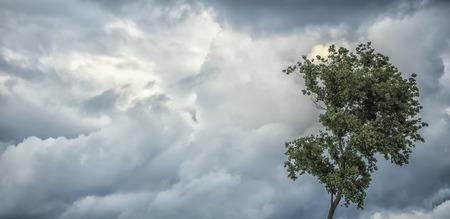 風が不快な寒さで積雲と灰色暗い曇天、風 copyspace、画像の水平方向の緑の葉と 1 本の木の自然のパノラマ背景