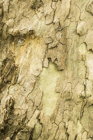corroded: Corroded Old Wood Tree Background