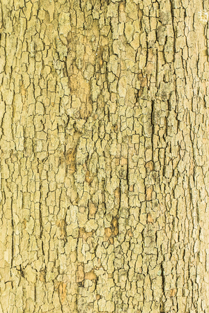 corroded: Corroded Old Wood Tree Pattern