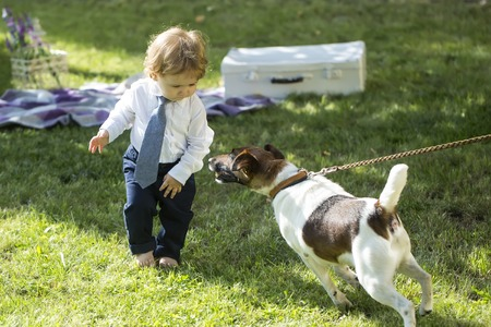jack russel: Little baby boy with blond hair in tie shirt and trausers playing on green grass with pedigree fox or jack russel terrier dog brown and white near vintage briefcase sunny day, horizontal photo