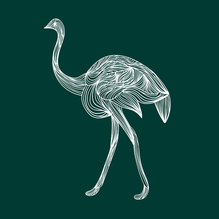 full length: Vector illustration of one drawn from white lines wild animal ostrich bird full length going on long legs with neck and feathers on emeral green background, square picture Illustration