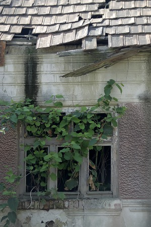 without window: Closeup of destroyed old run-down deserted empty house facade with broken tile roof grey wall and wild green plant growing through window without glass, vertical picture
