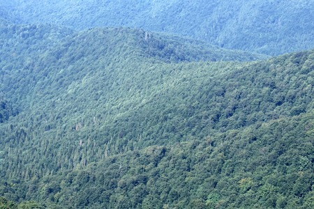spaciousness: Beautiful spaciousness landscape view from hill top on high mountains with lush deep green forest and many trees on natural background, horizontal picture