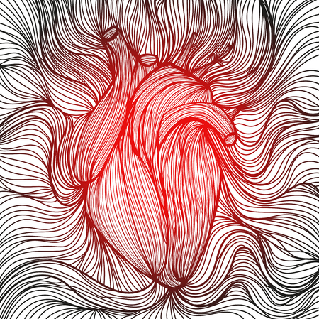 human heart anatomy: Vector illustration of one drawn from many red and black lines anatomic human heart on white background