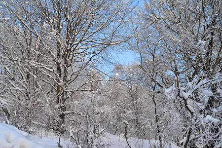 no snow: Beautiful winter white snowy frosty frozen cold landscape with snow on tree branches in forest on hill with blue sky sunny day outdoor on natural seasonal background with no people, horizontal picture