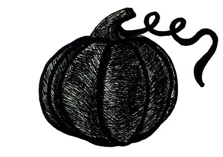 cucurbit: Art freehand pencil sketch illustration of one black halloween pumpkin vegetable on white background, horizontal picture Stock Photo
