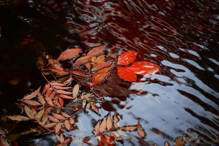 colorful water surface: Closeup view of many beautiful colorful autumn tree leaves red yellow orange green colors floating on wavy water with reflection of nature on outdoor background, horizontal picture