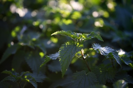 thick growth: Closeup view of beautiful fresh bright green lush spring young plant with leaves in sunny warm weather morning on natural background, horizontal picture Stock Photo