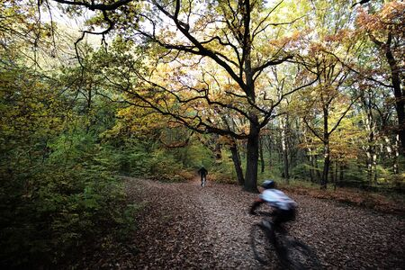 cycler: Photo of two male bicycle riders speedsters in movement cycling race in beautiful autumn park forest on colorful woodland landscape, horizontal background Stock Photo
