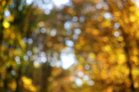 low angles: Soft focus photo low angle diffusive view of autumn bright blue sky sun spots sun-illuminated golden-leaved trees with heavy foliage on blurred sun-dappled background, horizontal picture