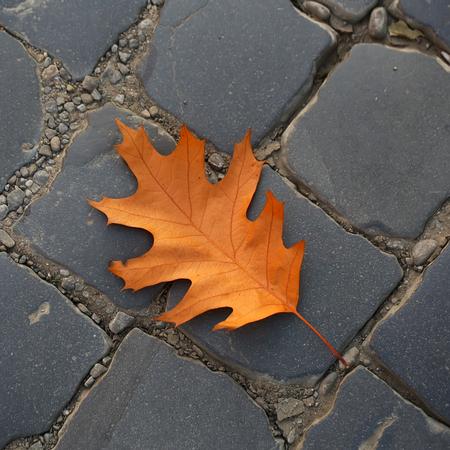 flagstone: Photo closeup of one beautiful fallen bright dry orange golden oak leaf on slate flag-stone pavement autumn season over dark grey stone background, square picture