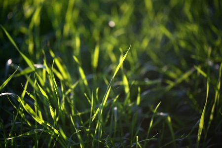 warm weather: Closeup view of beautiful fresh bright green lush spring grass on meadow in sunny warm weather morning on natural background, horizontal picture