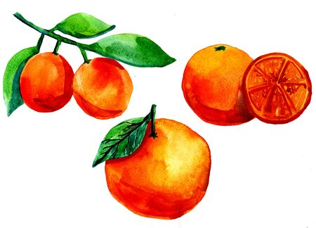 mandarin oranges: Closeup beautiful watercolor aquarelle painting hand drawn illustration of traditional symbol of New Year holidays mandarin oranges on brunch with green leaves on white background, horizontal picture Stock Photo