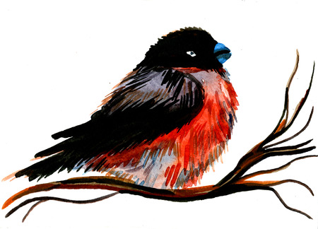 red breast: Closeup beautiful watercolor aquarelle painting hand drawn portrait of one bullfinch plump colorful bird with red breast black wings and head on tree branch on white background, horizontal picture Stock Photo