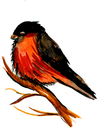 black breast: Closeup beautiful watercolor aquarelle painting hand drawn portrait of one bullfinch plump colorful bird with orange breast black wings and head on tree branch on white background, vertical picture