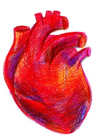 Gros plan dessiné main multicolore crayon dessin crayon portrait anatomique de carmin un rouge-sang cavité cardiaque du coeur humain avec de grands vaisseaux sur papier texturé sur fond blanc, image verticale Banque d'images