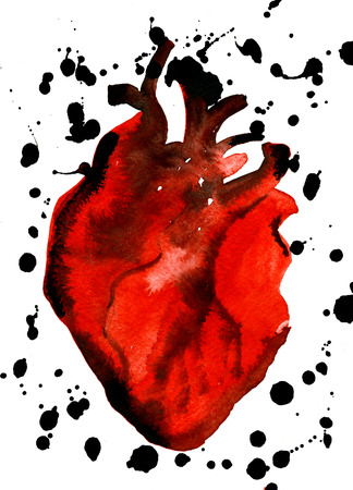 carmine: Abstract closeup watercolor aquarelle painting hand drawn anatomic portrait of one blood-red carmine human heart cardiac chamber with vessels black blots blobs on white background, vertical picture