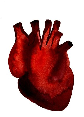 Closeup beautiful watercolor aquarelle painting hand drawn anatomic portrait of one blood-red carmine human heart cardiac chamber with great vessels on white background, vertical picture