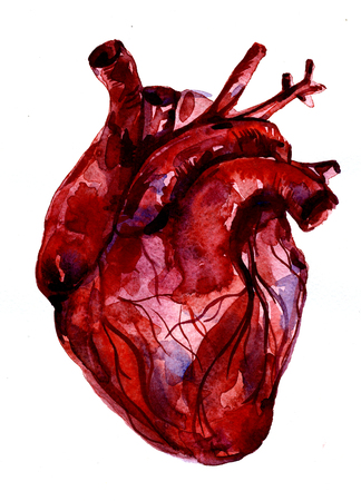 carmine: Closeup beautiful watercolor aquarelle painting hand drawn anatomic portrait of one blood-red carmine human heart cardiac chamber with blood vessels on white background, vertical picture Stock Photo