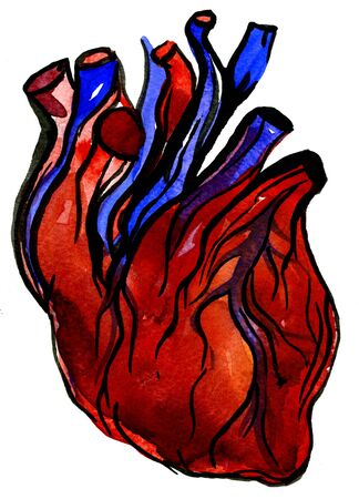 vermilion: Closeup beautiful watercolor aquarelle painting hand drawn anatomic portrait of one big colorful blood-red carmine human heart cardiac chamber with blood vessels on white background, vertical picture
