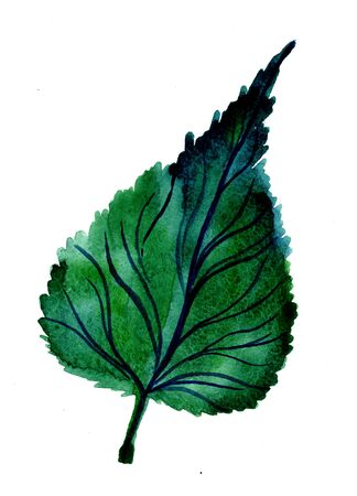 Closeup beautiful watercolor aquarelle painting hand drawn illustration of one bright green birch leaf on white background, vertical picture