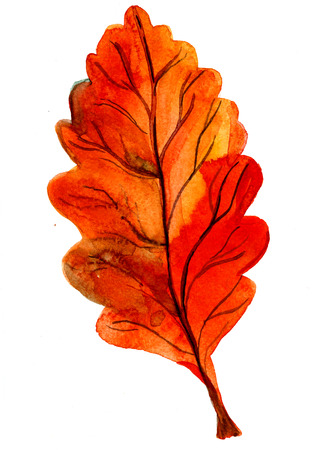 oak leaf: Closeup beautiful watercolor aquarelle painting hand drawn illustration of one autumn season beautiful fallen dry bright orange golden oak leaf on white background, vertical picture Stock Photo