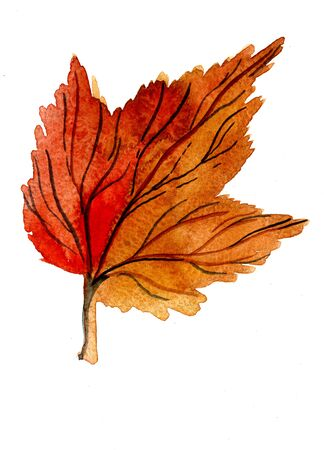 dry leaf: Closeup beautiful watercolor aquarelle painting hand drawn illustration of one autumn season beautiful fallen dry bright orange golden snowball tree leaf on white background, vertical picture