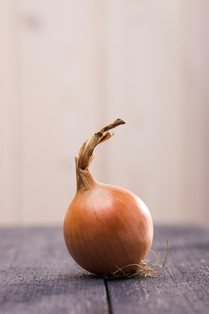 Domestic golden bulb onion vegetable seasoning for natural food healthy lifestyle rich harvest in autumn object lying on dark wooden table on blur light background closeup indoor, vertical picture Banco de Imagens