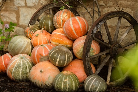 countrified: Photo closeup of whole fresh ripe orange pumpkins stacked between old rusty wheels on  autumn day harvest time on countrified background, horizontal picture Stock Photo