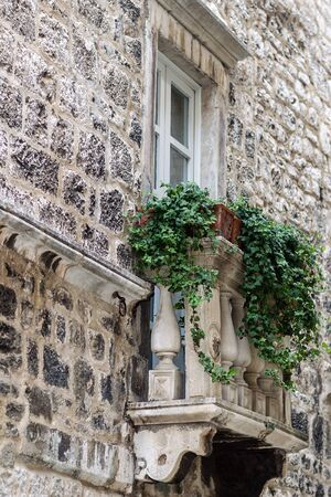 balcony window: Photo bottom side view of old aged building made of grey stone masonry with one window and lovely small classic balcony decorated with green climbing plants on cityscape background, vertical picture