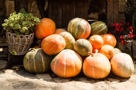 countrified: Photo of whole fresh ripe orange pumpkins stacked on sunny autumn day harvest time on countrified background, horizontal picture Stock Photo