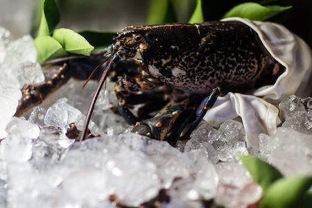 crustacean: Photo closeup frozen fresh shellfish crustacean crab sea fish seafood preserved on ice for sale at market on blurred chilly background, horizontal picture