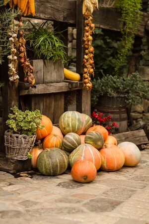 countrified: Photo of whole fresh ripe orange pumpkins stacked ropes of onions garlic and corn on autumn day harvest time on countrified background, horizontal picture