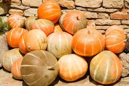 countrified: Photo closeup of whole fresh ripe orange pumpkins stacked on sunny autumn day harvest time on countrified background, horizontal picture