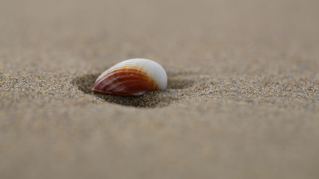 grained: Photo closeup of one beautiful white and orange shell lying on beige beach sea marine grained sand on blurred background, horizontal picture Stock Photo