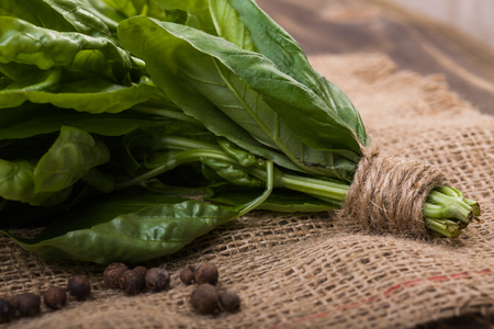 summer garden: Closeup photo of flavorful raw green basil stalks with leaves in bunch tied with twine on burlap with black pepper on wooden table, horizontal picture Stock Photo