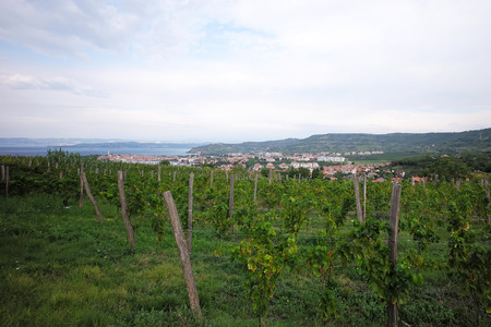 vinery: Photo long shot of beautiful green vineyard vinery vine land on hillsides in rows farm houses day time summer on cloudy sky background, horizontal picture Stock Photo