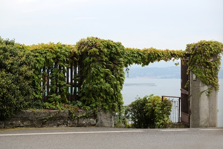 clambering: Photo closeup beautiful view of seascape through open gate of fence overgrown with green creeper clambering plants on hillside mountain on milky sea background, horizontal picture