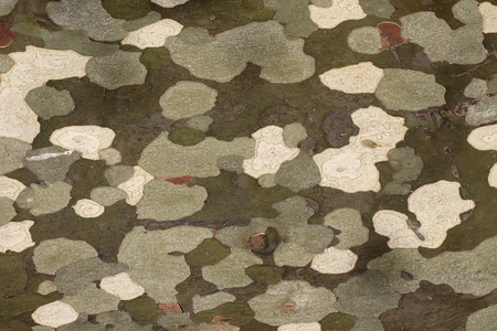 shroud: Photo closeup of green grey army military colours abstract patches stains spots on surface of camouflage background, horizontal picture