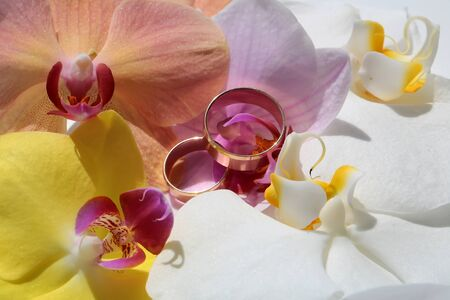 nuptial: Two elegant pretty golden wedding rings jewel on blossom of fresh colorful yellow pink white splendid orchids flowers natural traditional arrangement for nuptial ceremony closeup studio, horizontal