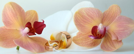 orchidea: Pair of golden gorgeous amazing wedding rings jewelry traditional symbolic jewel on beautiful fresh pink and white orchidea background closeup panoramic image studio, horizontal pciture